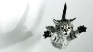 el-blog-de-los-penotes-mascotas-gatos-sindrome-gato-paracaidista