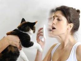 alergia-a-los-gatos